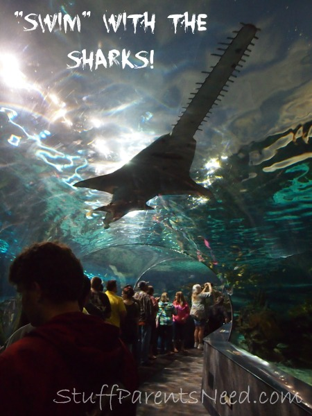ripley's aquarium of the smokies 3