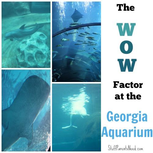 georgia aquarium review 1