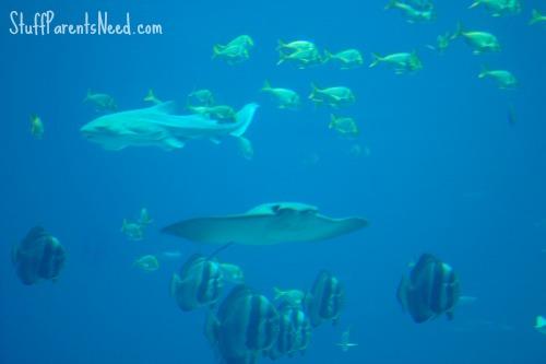 georgia aquarium review 5