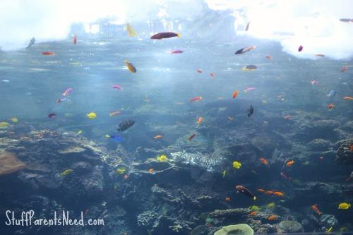 georgia aquarium review 6