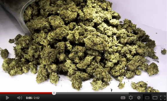 Who's Got the Herb is the STUFF STONERS LIKE VIDEO of the DAY