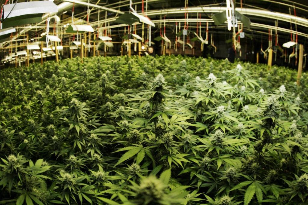 Congress Ends War on Medical Marijuana
