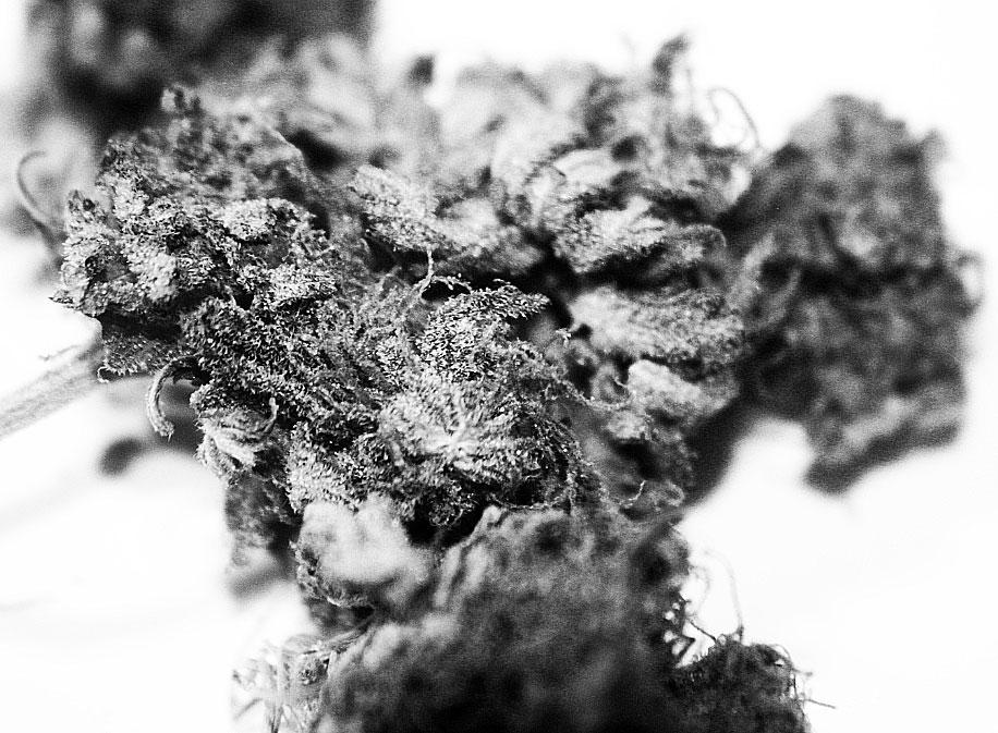 THC Bomb seeds
