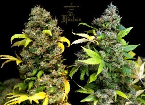 The-Kitchen-presented-by-Uptowngrowlab-kickdown
