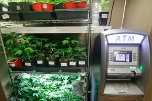 weed and banking
