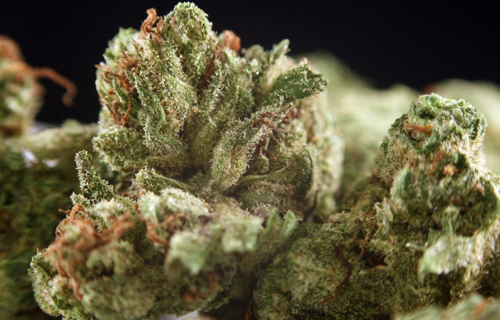 Dr Who strain