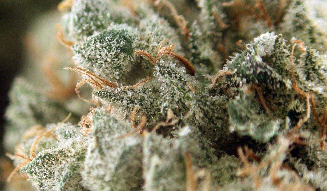 So STINKY—Chemdog is the type of weed you want to keep in a jar