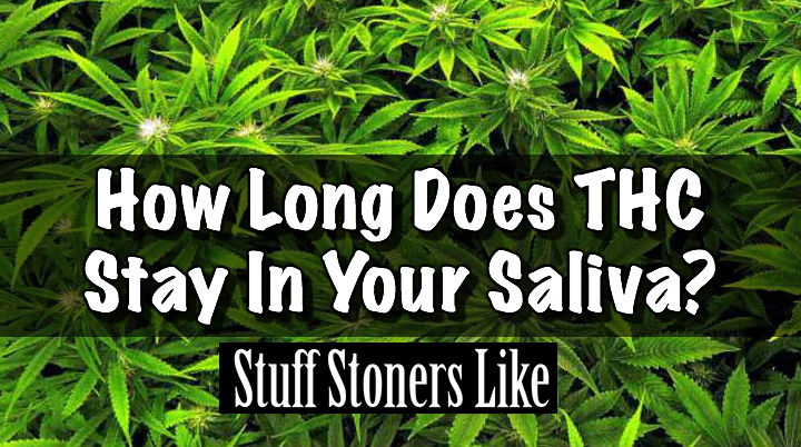 How long does thc stay in your saliva