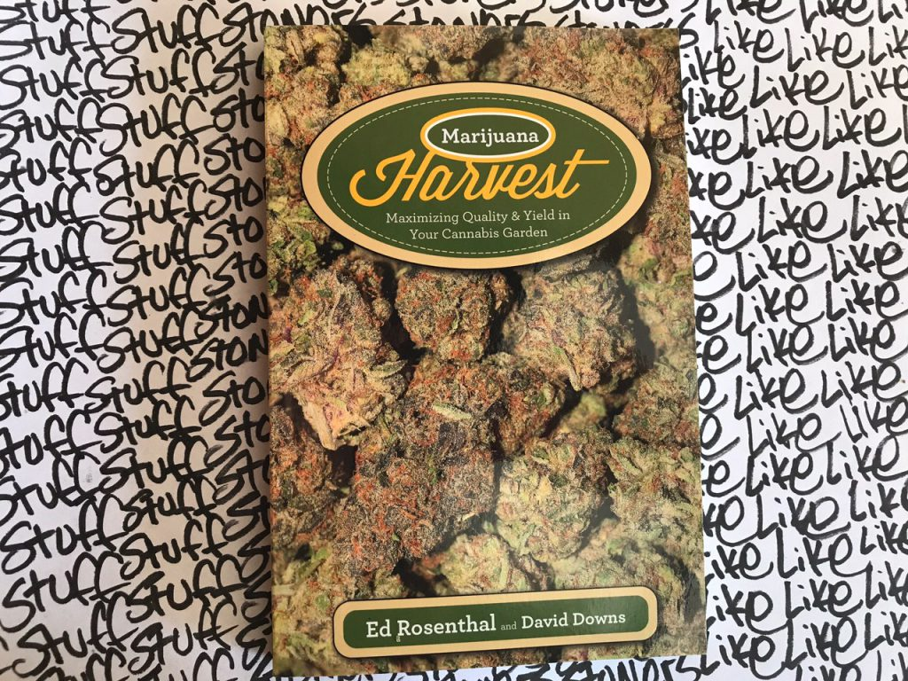 Marijuana Harvest_Rosenthal
