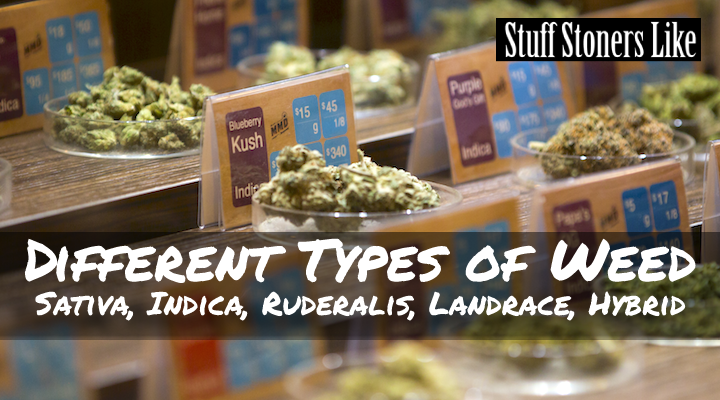 There are a lot of different types of weed out there. Some newcomers to the marijuana scene might find it a bit overwhelming.