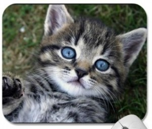 Cute Tabby kitten ready to play and printed on this mousepad