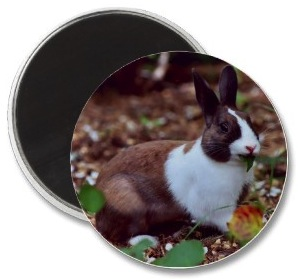 Bunny rabbit fridge magnet