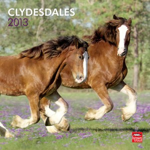 Clydesdales Horse 2013 Wall Calendar