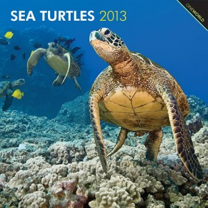 Sea Turtle 2013 Wall Calendar