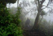 mist walkers