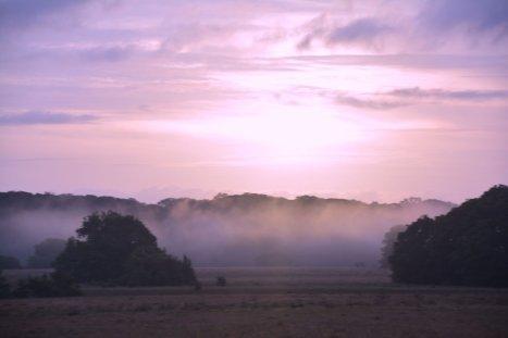 Dawn at the Tassi Camp, Loango NP, Gabon
