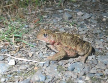 We had a chat, this frog and I (and my very bright flash)