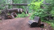 A sitting-rocker-log. Why not?