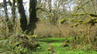 Evergreen!