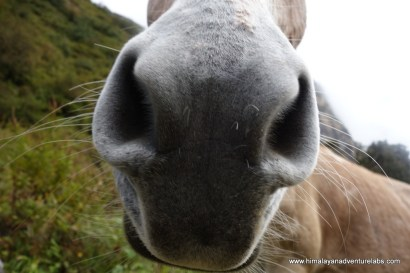 Some serious nose hairs