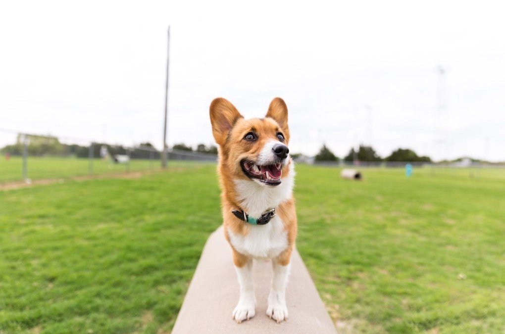 7 Reasons Why I Stopped Going to Dog Parks