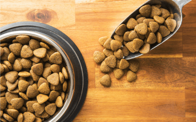 How To Measure Your Dog's Food Portions The Right Way