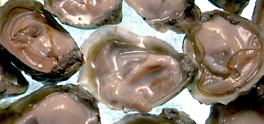 olympiaoysters