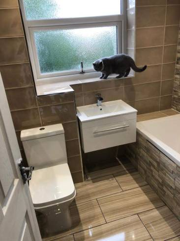 Woolton Bathroom - Cat