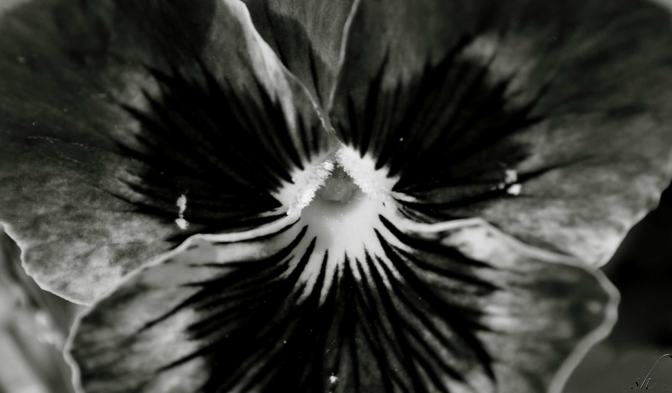 Black and white flowers still make me happy  stunningly
