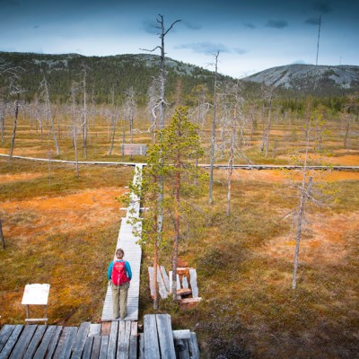 Exploring the Pyhä-Luosto National Park, in Finnish Lapland