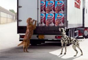 Stunt-dogs-film-and-Tv-portfolios-1