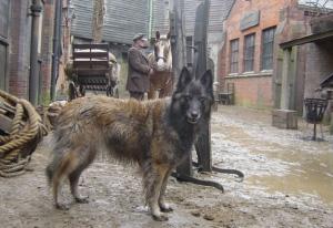 Stunt-dogs-film-and-Tv-portfolios-10