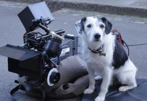 Stunt-dogs-film-and-Tv-portfolios-21