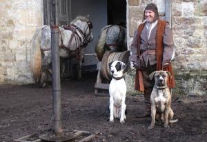 Stunt-dogs-film-and-Tv-portfolios-26