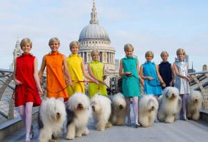 Stunt-dogs-film-and-Tv-portfolios-32