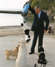 stunt-dogs-film-and-TV-10