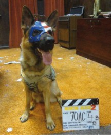 stunt-dogs-film-and-TV-8