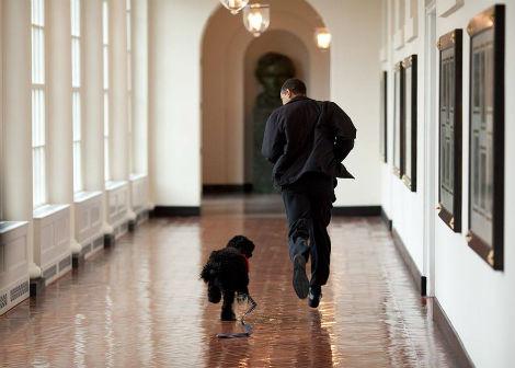 Le président Barack Obama court avec son chien