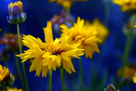 yellow-and-blue