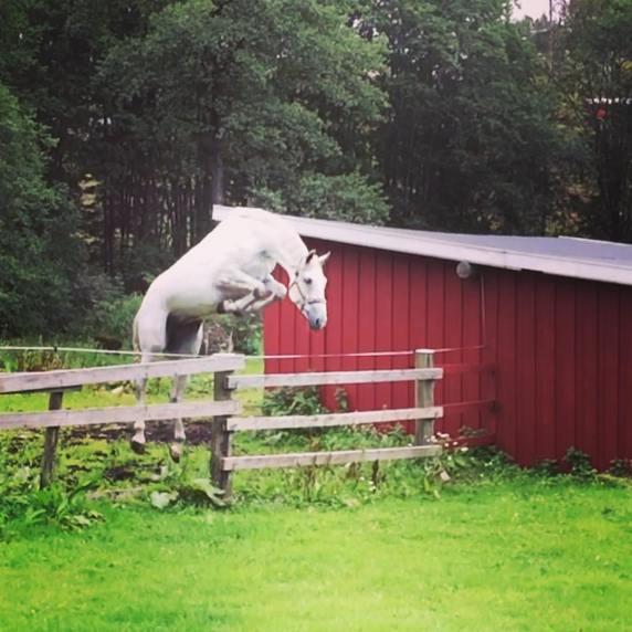S.E. Chanel trener iherdig på egenhånd hjemme på Løkka.
