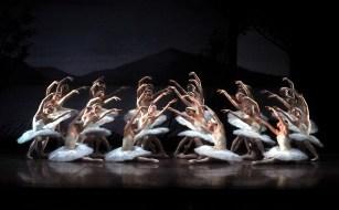 Swan Lake: The Stuttgart Ballet ladies