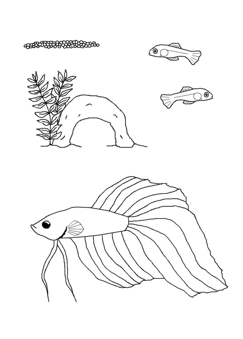 Siamese fighting fish are actually called Betta Splendens