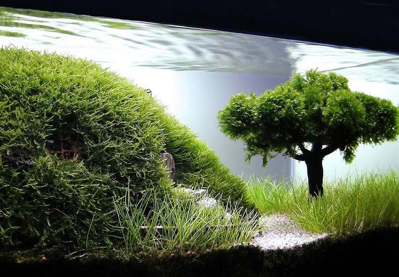 open plan kitchen living room design ideas grey sofa hardscape-aquarium   landscape