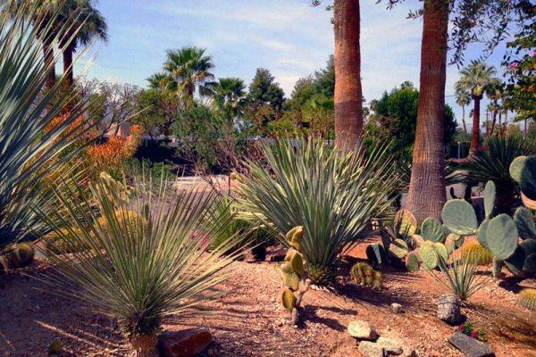 desert landscaping create