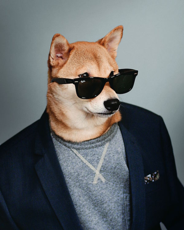 Style Berater Fashion Dog Navy Blazer © David Fung/Yena Kim