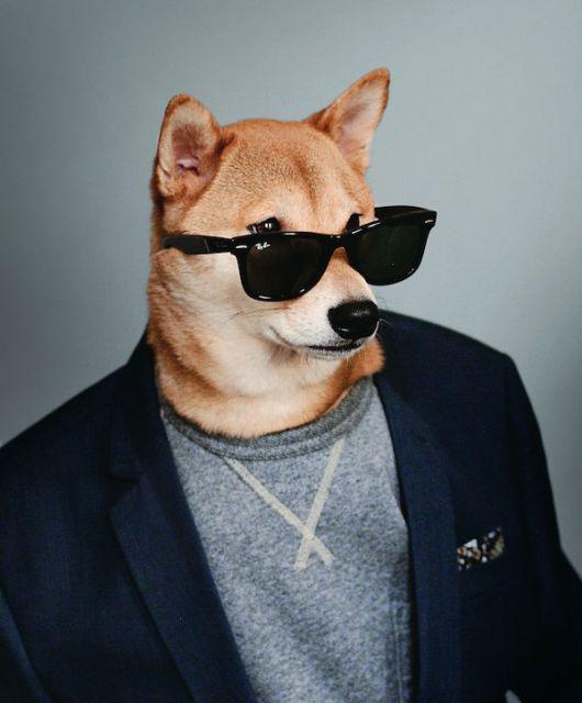 Style Berater Fashion Dog Navy Blazer © David Fung/Yena Kim
