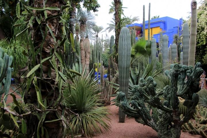 majorelle-gardens-morocco