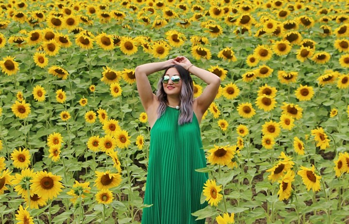 bogle-seeds-sunflower-field-toronto-ontario-27