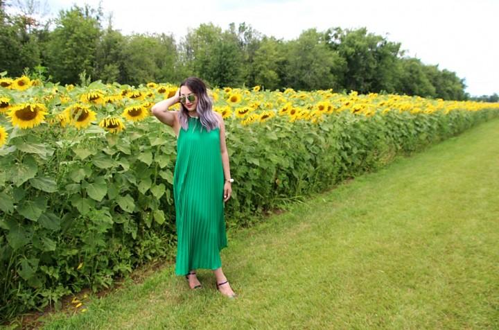 bogle-seeds-sunflower-field-toronto-ontario-7