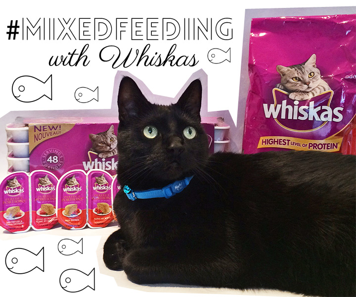 mixed-feeding-cats-with-whiskas-wet-food-dry-food